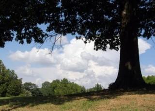 shade-tree-summer